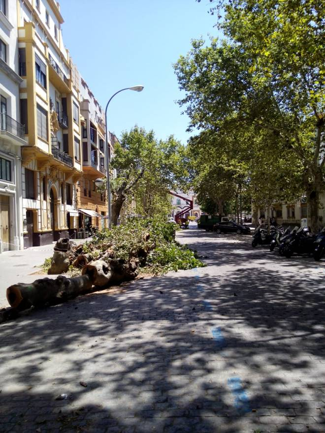 avenida de cadiz 13A 2018-07-09 at 18.21.56