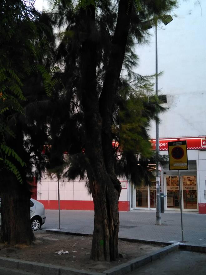 calle caños de Carmona 12 julio 2018-07-10 at 08.25.57
