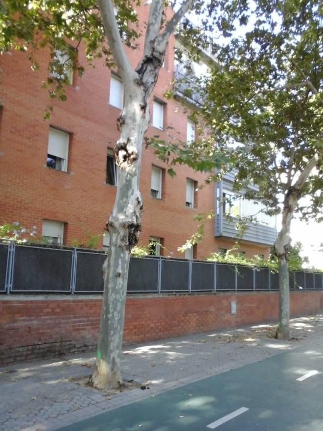 la calle Siena 2018-07-16 at 10.14.03