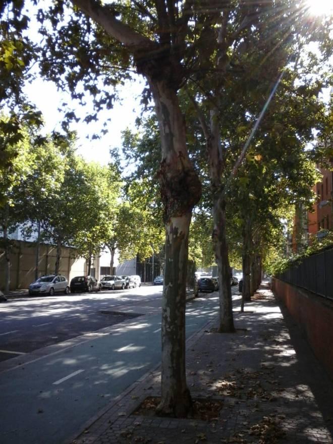 la calle Siena 2018-07-16 at 10.14.17